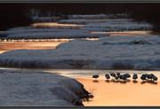 crane-river2