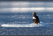 eagle-ice