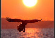 eagle-sunrise