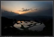 Niigata,rice,spring