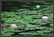 Japan,Jindai,Macro,Nature,Rain,Tokyo,drops,spring,water,wet