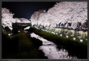 Chofu,Japan,Nogawa,Sakura,Tokyo,cherry blossoms,hanami,light up,spring,ライトアップ,桜,野川