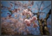 Japan,Park,Tokyo,spring