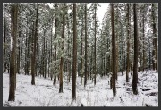 Forest,Winter,gallery