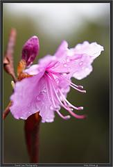 Tateshina Flower