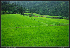 Niigata trip