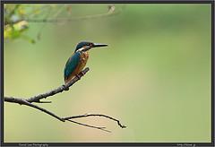 Jindai Bird