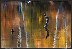 Azami Pond