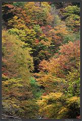 Nagano Autmun