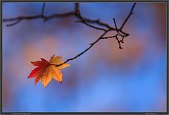 Autumn in Nagano