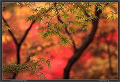 Tokyo Autumn Colors